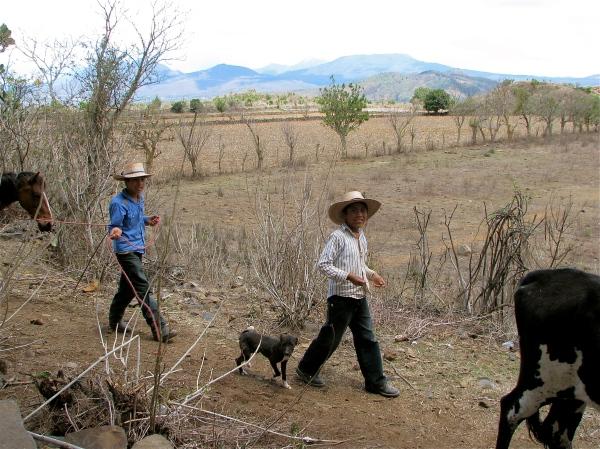 Les paysans mexicains ne peuvent pas concurrencer les agriculteurs américains, qui bénéficient d'importantes subventions du gouvernement